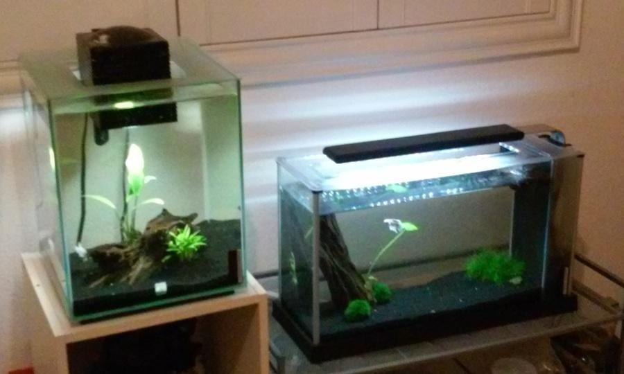 Second Pic, DIY 2.5 Gallon Red Cherry Shrimp Tank