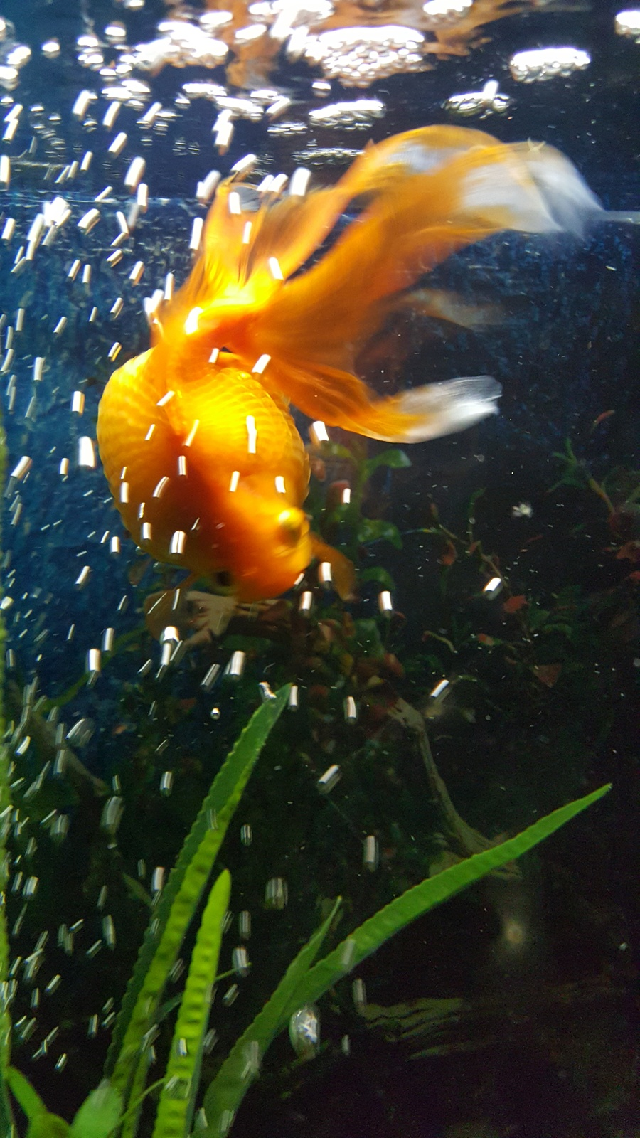 My Fish Has Similar Symptoms To What I Read About Here ...
