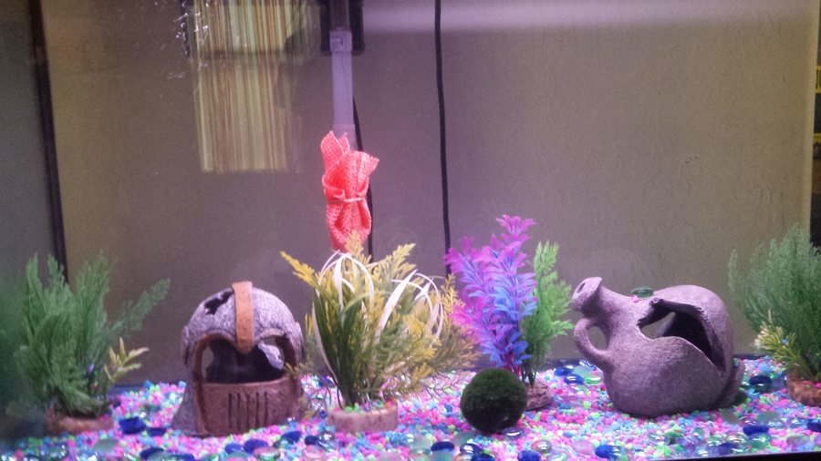 how often do we need to change the water in a 36-40 gallon tank with ...