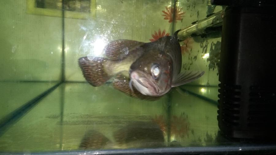 Arwana Treatment My Aquarium Club