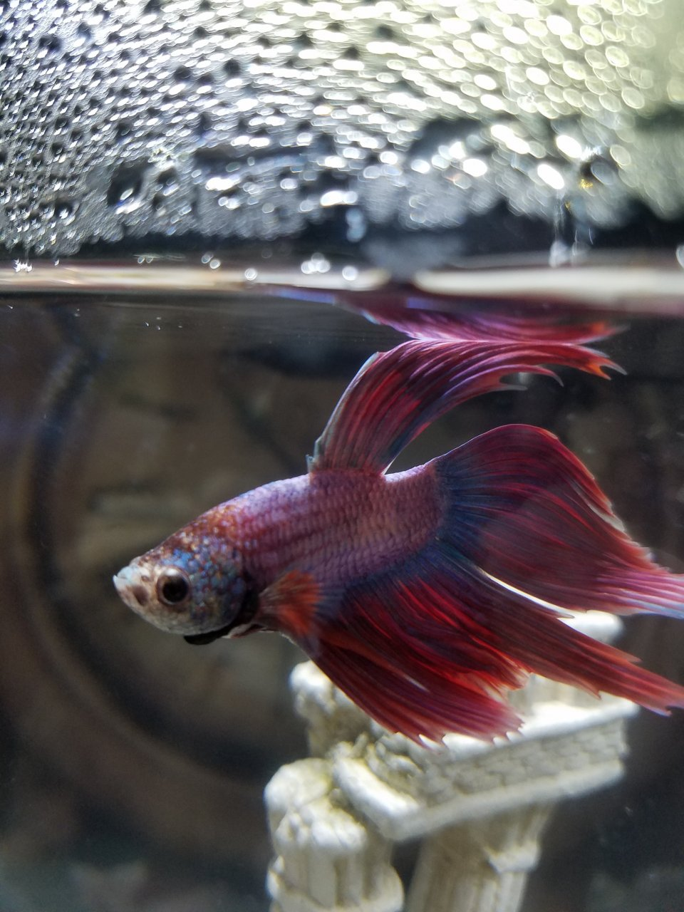 Why do my betta fish keep dying