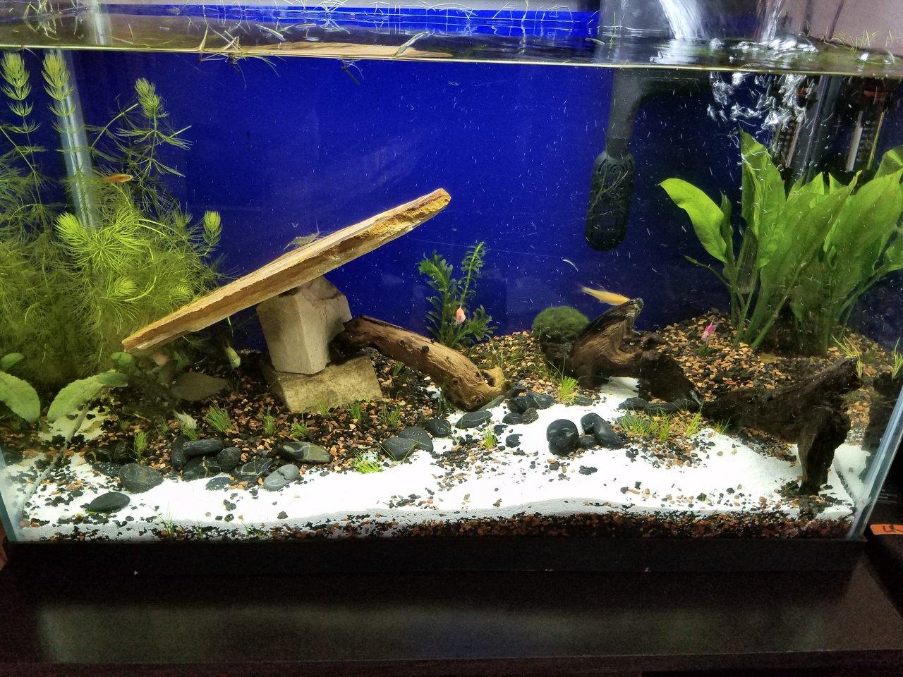 20 Gallon Tall Stocking My Aquarium Club