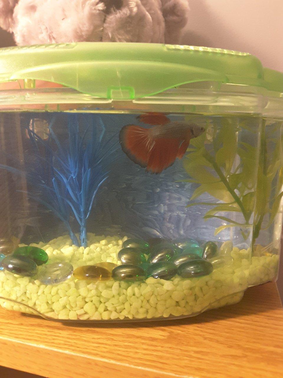 Male Baby Betta Won T Eat My Aquarium Club