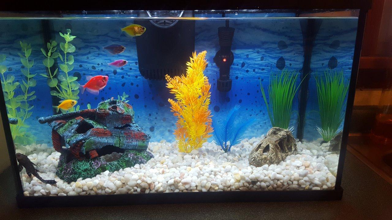 i have 5 glo fish in a ten gallon tank | my aquarium club