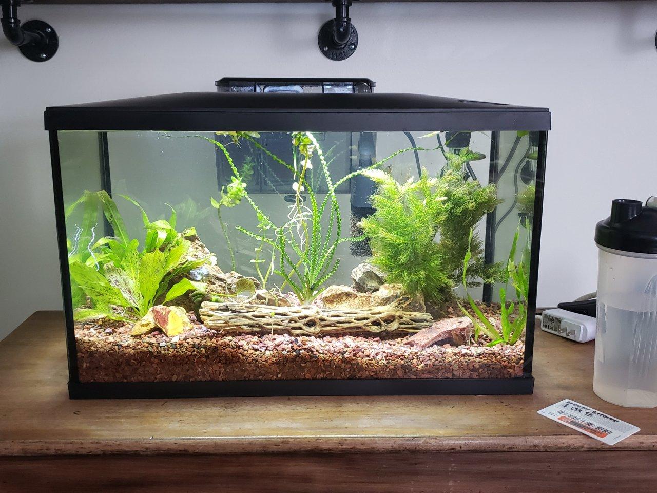 10 Gallon Tank Ideas My Aquarium Club