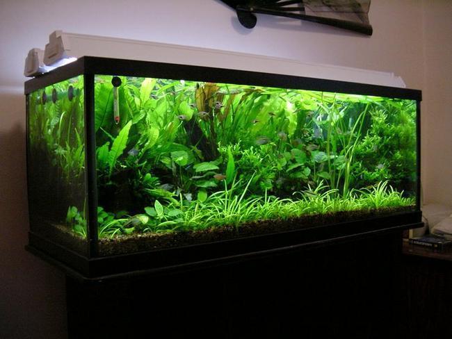 Led светильник для аквариума своими руками фото 107