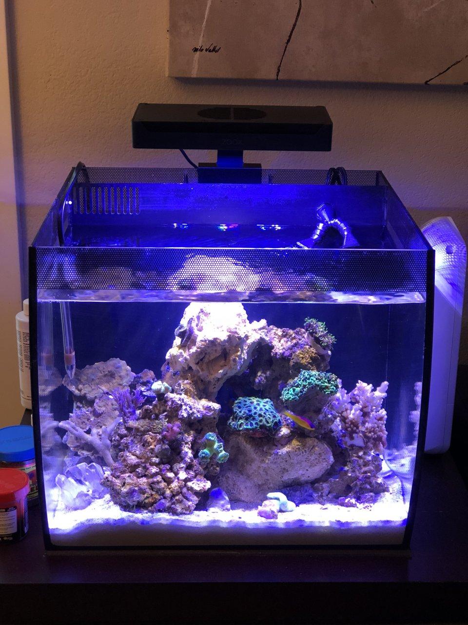 Fluval Flex For Saltwater   My Aquarium Club