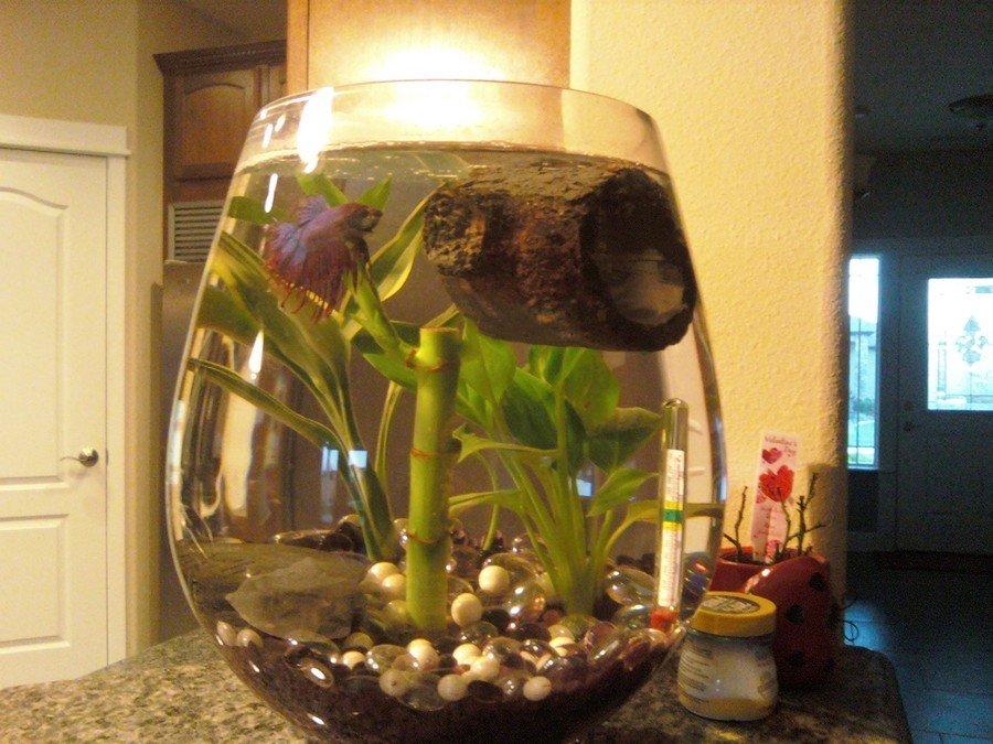 Betta Fish Cloudy Water Smelly And Filmy My Aquarium Club