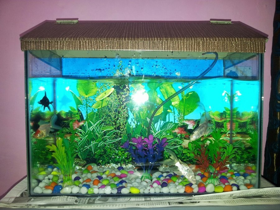 New small fish tank 4 fishes died already my for Acrylic vs glass fish tank