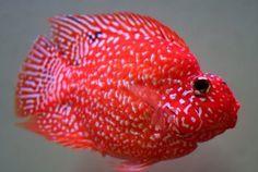 Aninimal Book: Parrot Fish | My Aquarium Club
