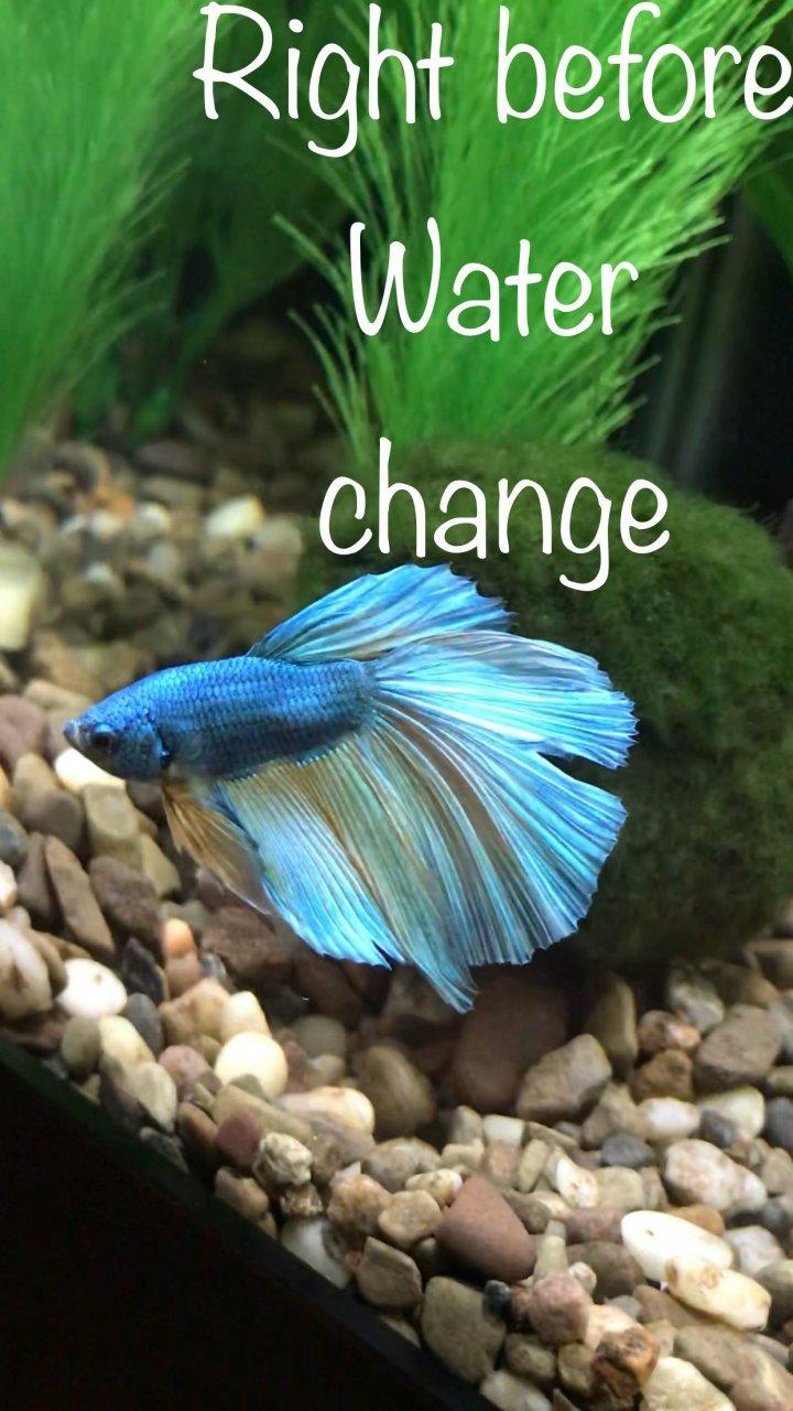 Please Help Me! My New Betta Is Not Looking Good:( | My Aquarium Club