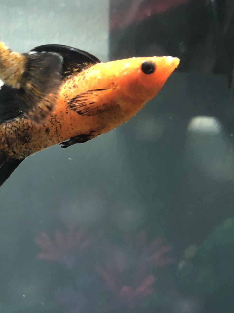 Fish Dying Quickly   My Aquarium Club