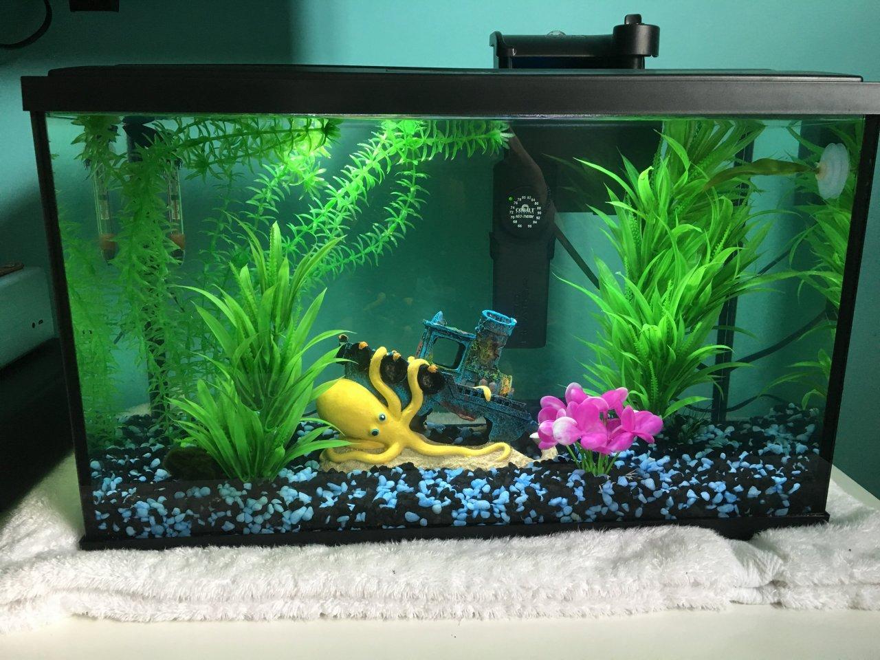 10 Gallon Stocking Ideas Please My Aquarium Club