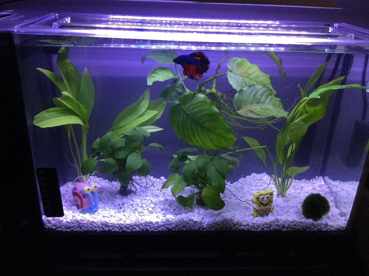Fluval Spec V Tank Flow Issues My Aquarium Club