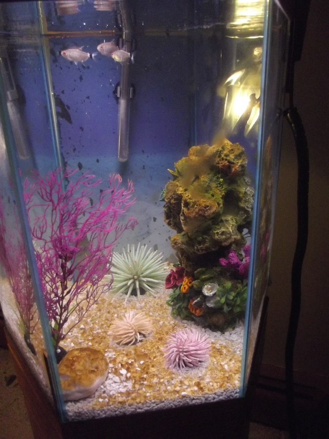 I Have A 25 Gallon Hexagon Freshwater Fish Tank  I Have 8