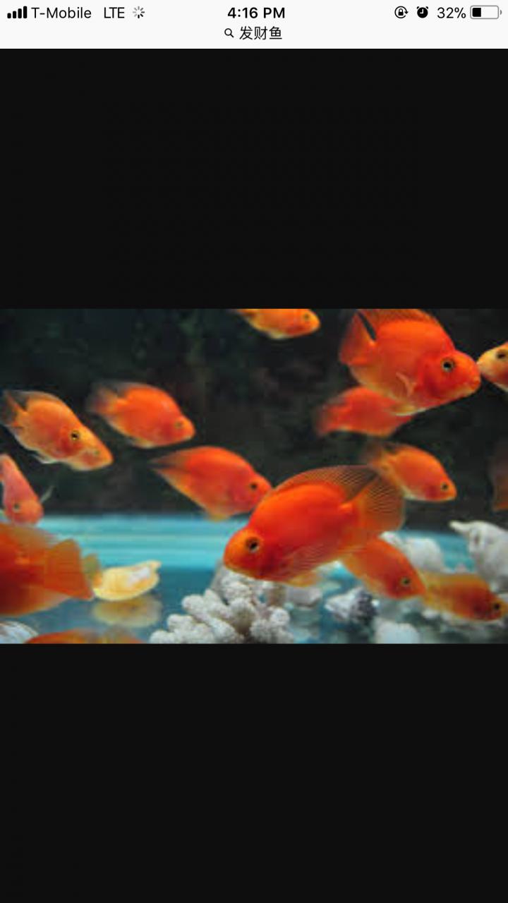 What Fish Is This ? | My Aquarium Club