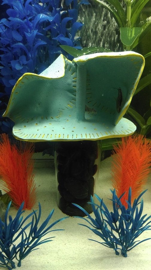DIY Aquarium Decor? | My Aquarium Club
