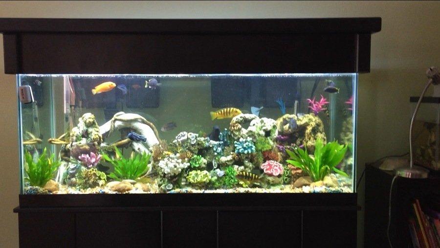 Small Bubbles All Over Tank My Aquarium Club