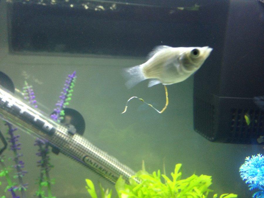 Stringy White Fish Poop   | My Aquarium Club