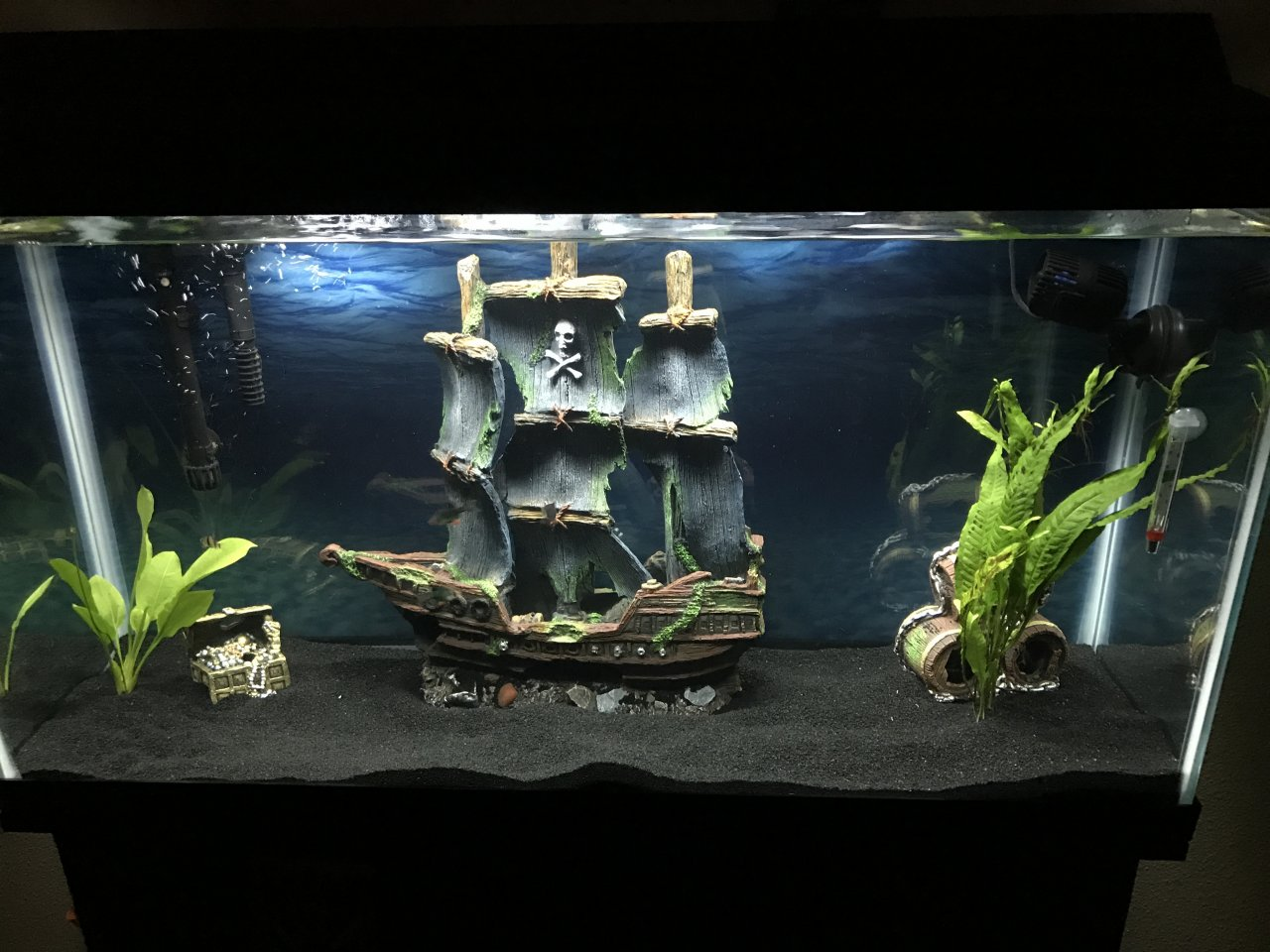 Advice on 38 gallon tank my aquarium club for 38 gallon fish tank