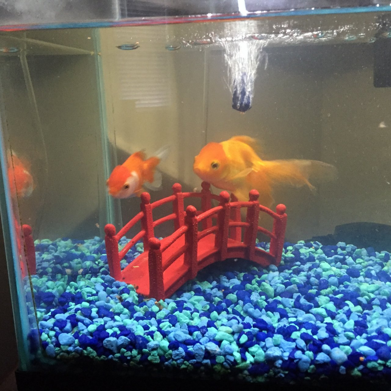 My Goldfish Changed Colors? | My Aquarium Club