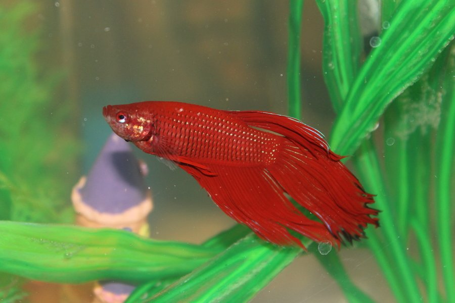 Is Aquarium Salt Alright For Betta Fish I Have A 2 5 Gallon Tank How Much My Aquarium Club