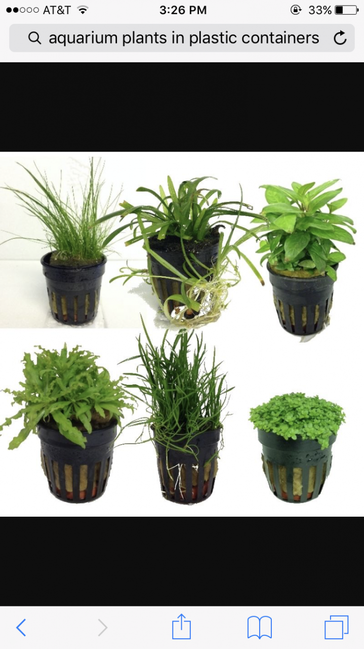 Or should I try out potted plants and will make my aquarium look  better.Please help