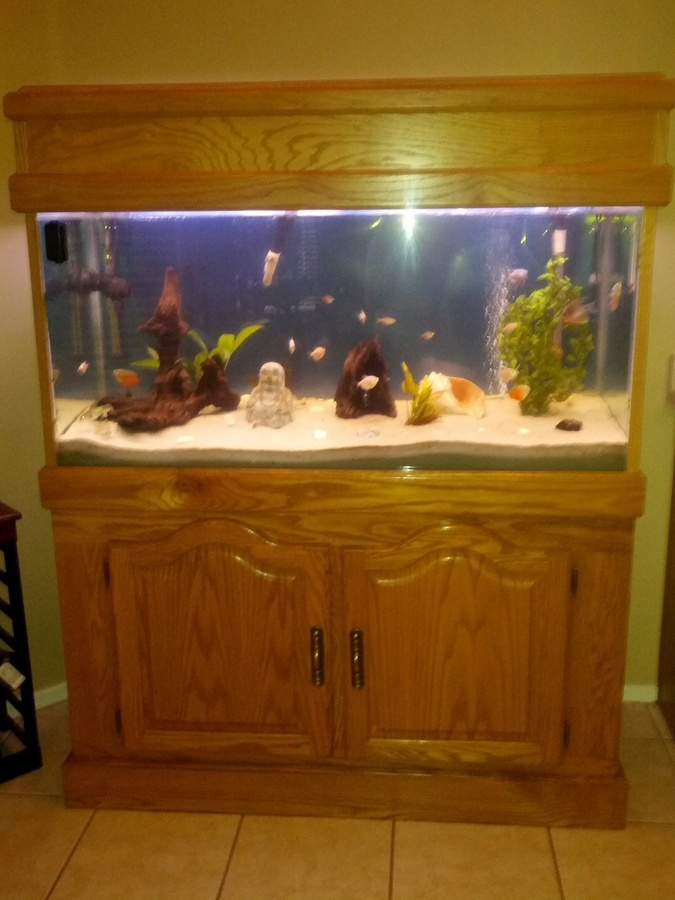 I Want To Convert My Fw Tank To Brackish Due To My Silver Tipped