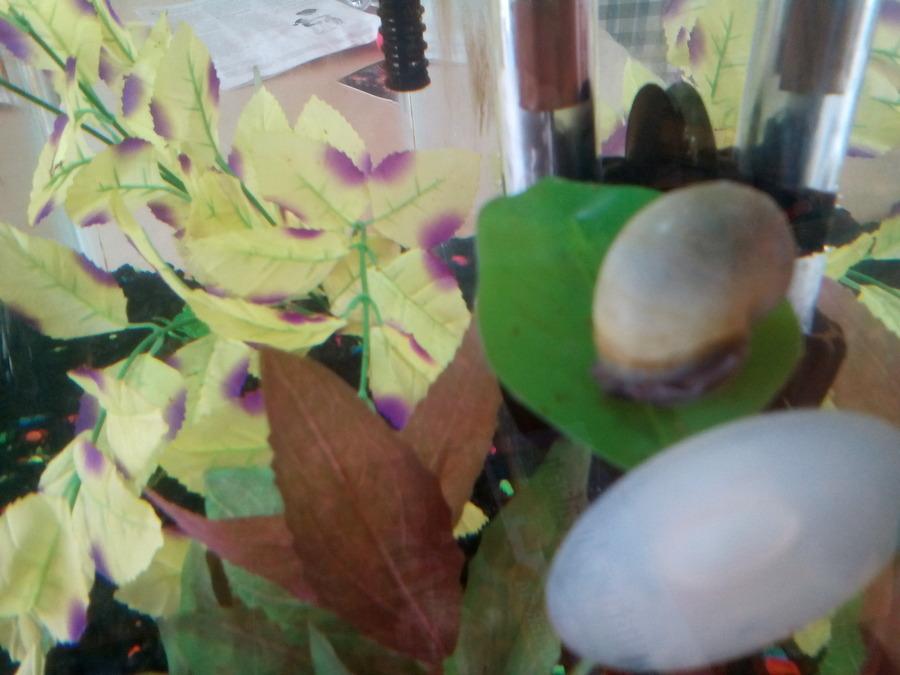 Betta Doesn T Like The Hammock My Aquarium Club