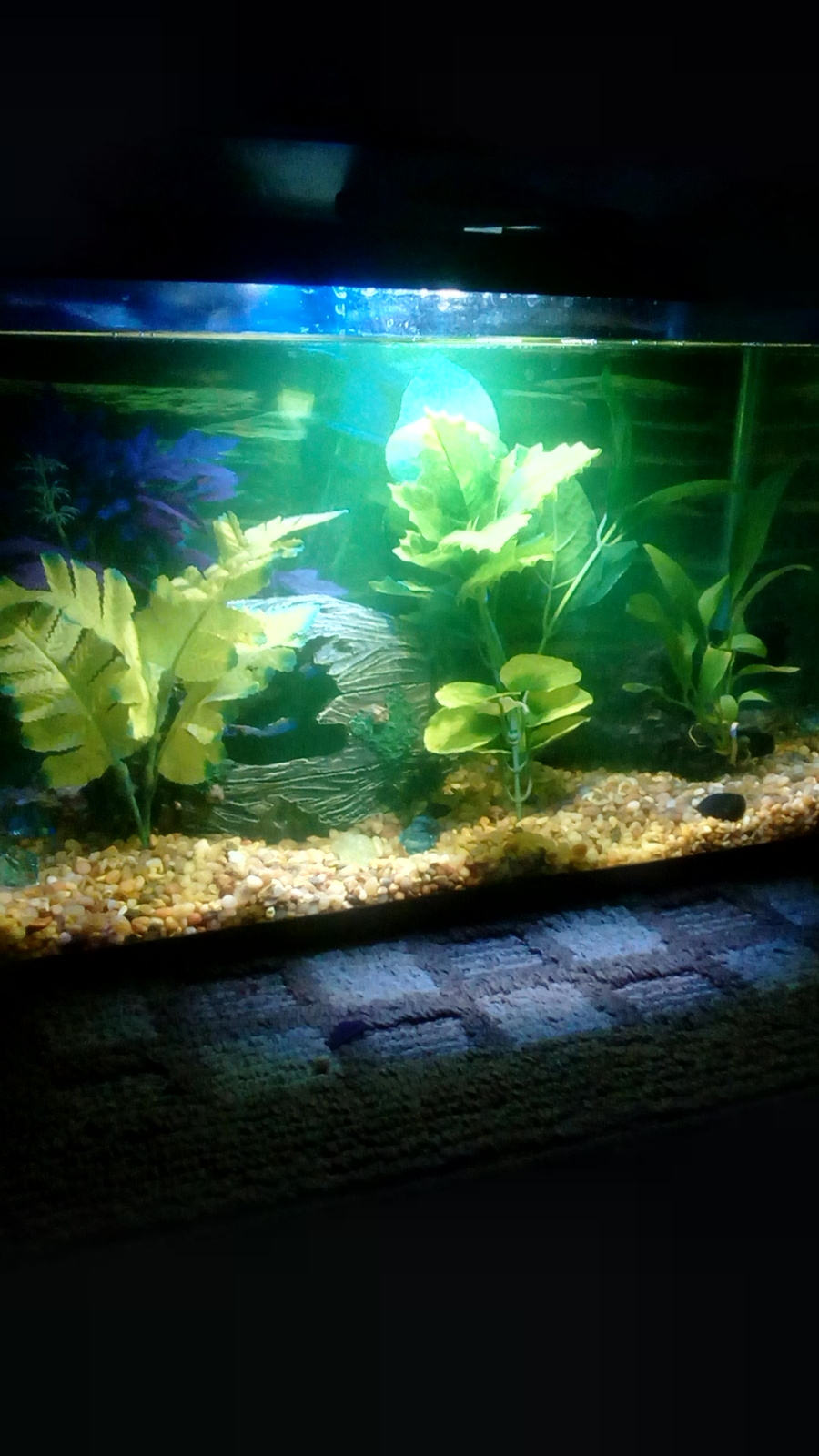 I Did A 100% Water Change After Treating My Tank With Api
