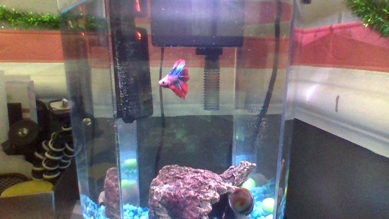 So Today I Went To Petsmart I Got A Male Betta I Do Not Want To Kill Him Any Advice My Aquarium Club