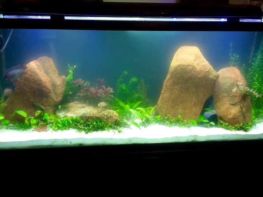 how to make beneficial bacteria bloom aquarium