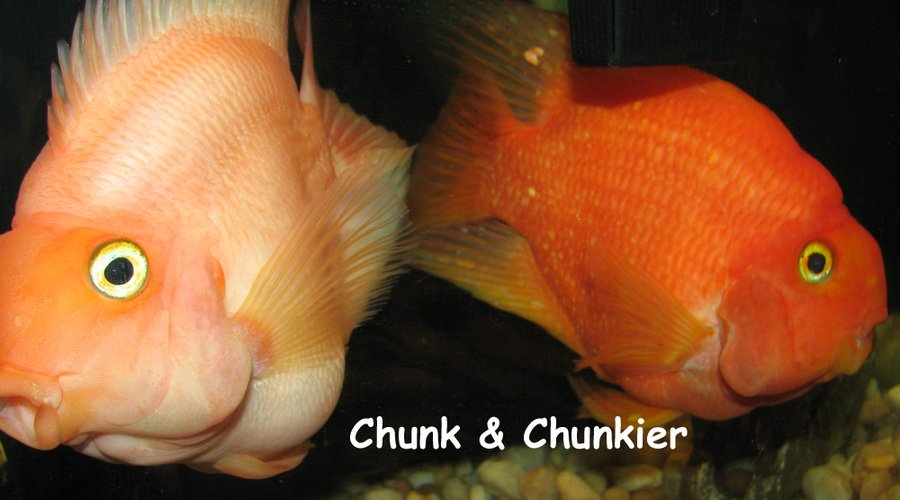Aninimal Book: How Do I Tell If My Parrot Fish Is Mail Or Female | My ...