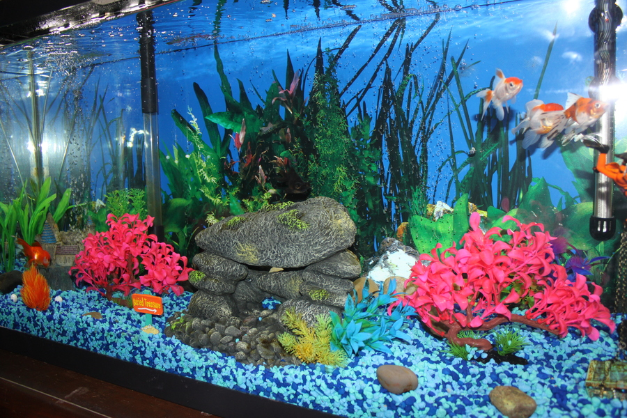goldfish darting around tank games