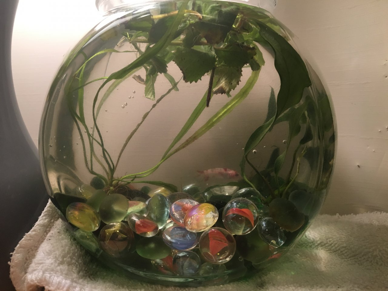 Is this a good betta tank my aquarium club if so could you tell me the pros and cons of your tank i would love to see any photos of your tank thank you so much my betta will thank you reviewsmspy