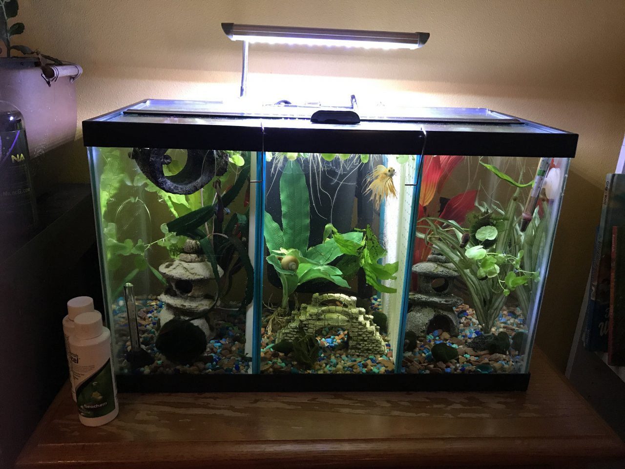 How should i filter a divided betta tank i really want for Split fish tank
