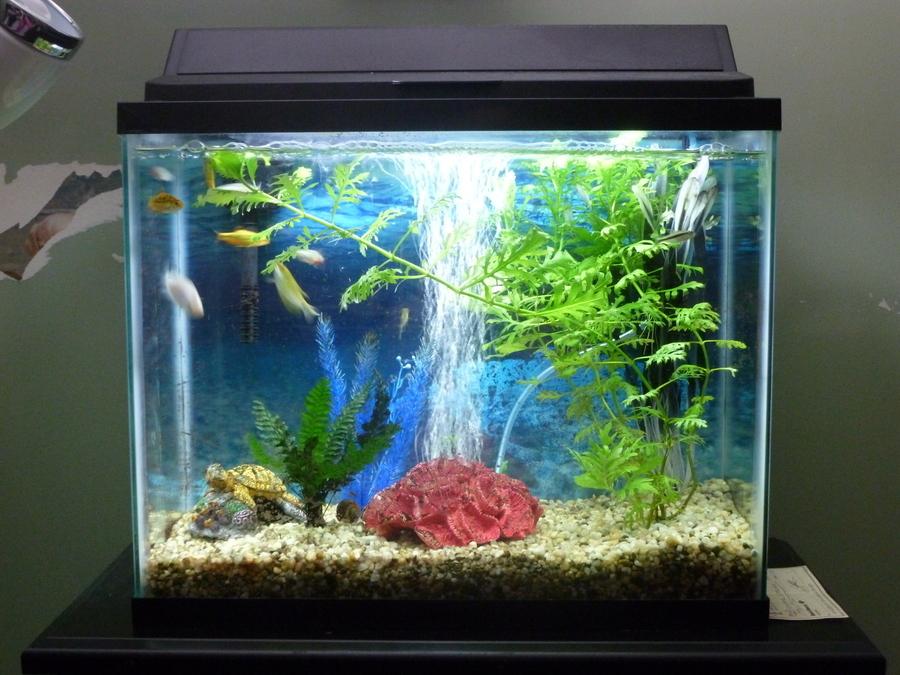 My 14 Gallon Planted Tank | My Aquarium Club