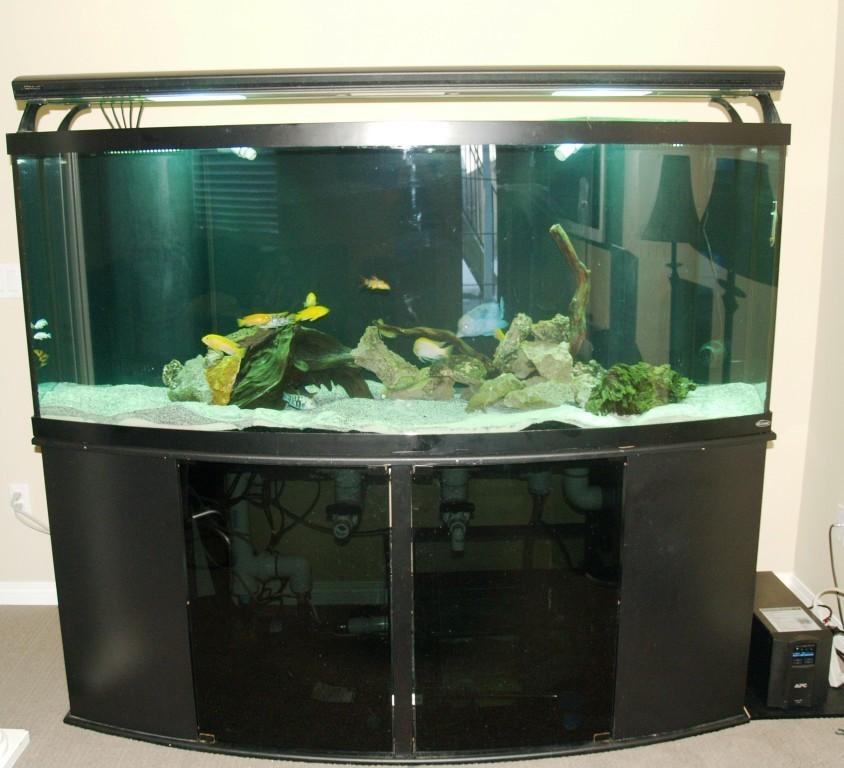 My New 200 Gallon Freshwater My Aquarium Club