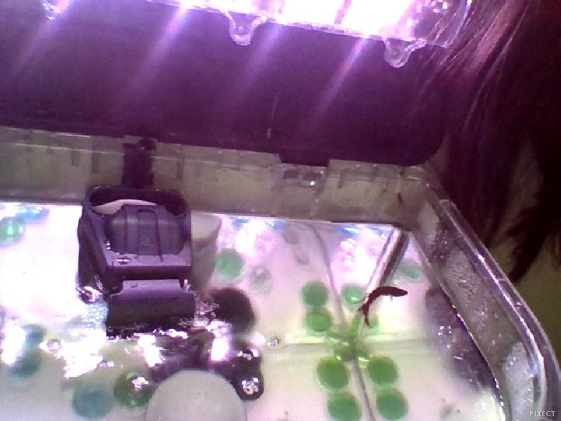 is my filter too strong? betta fish i have a 5 gallon tank that came ...
