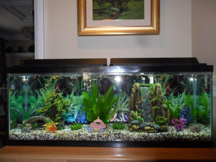 Ideas for 50 gallon freshwater tank my aquarium club for 50 gallon fish tank hood