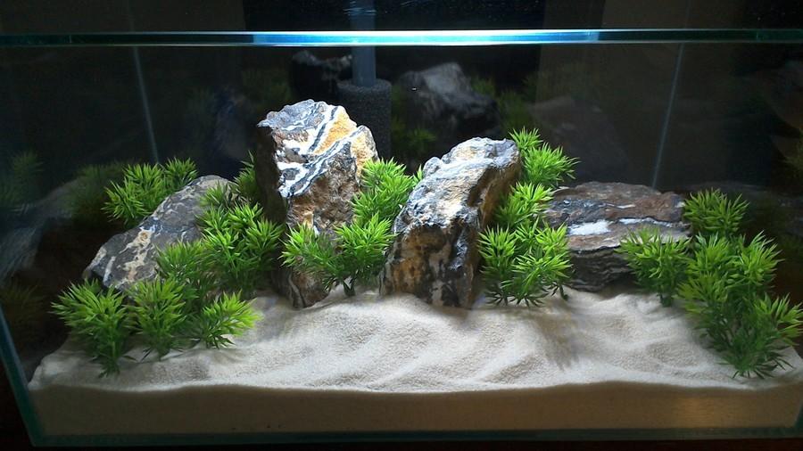 FLuval Edge Decor Setup | My Aquarium Club