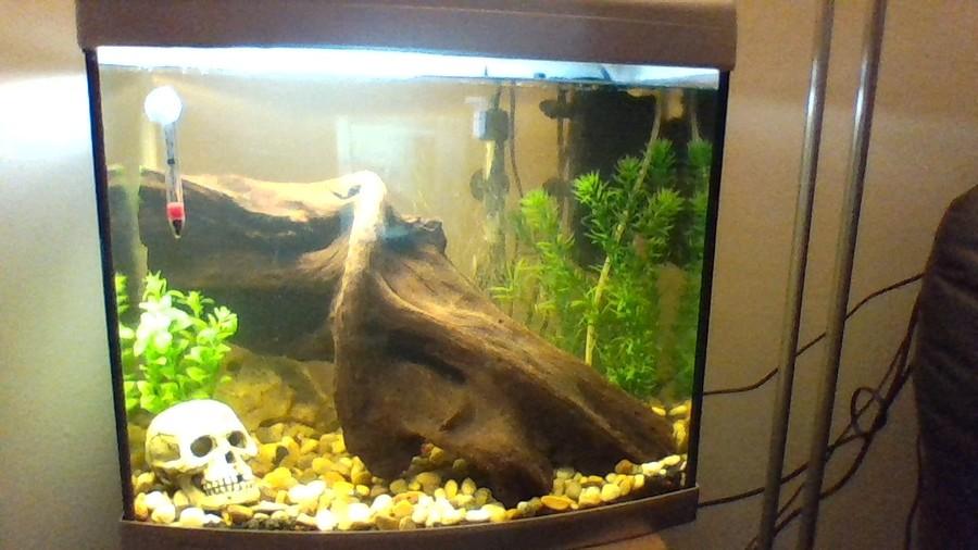 Does moss spread on bogwood my aquarium club for High nitrite in fish tank