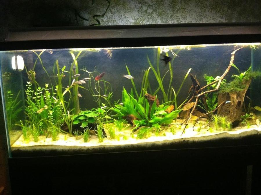 Aquascaping With Soil My Aquarium Club