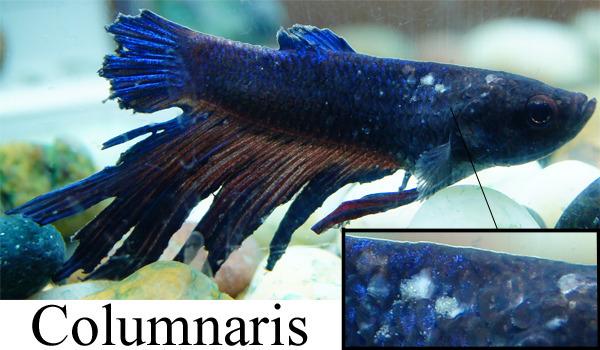 petco and petsmart my aquarium club