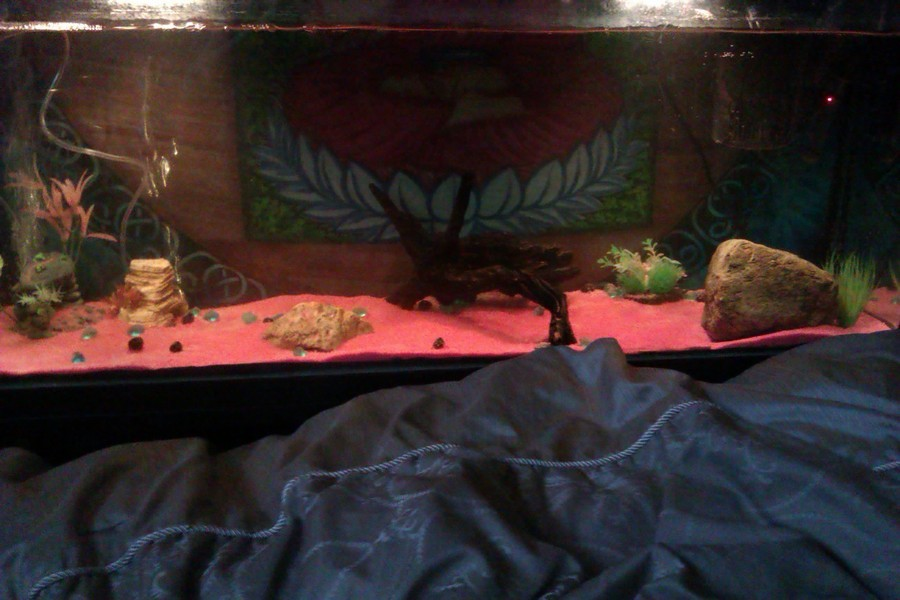 How Do You Think My Newly Set Up Oscar Frontosa Cant Decid My