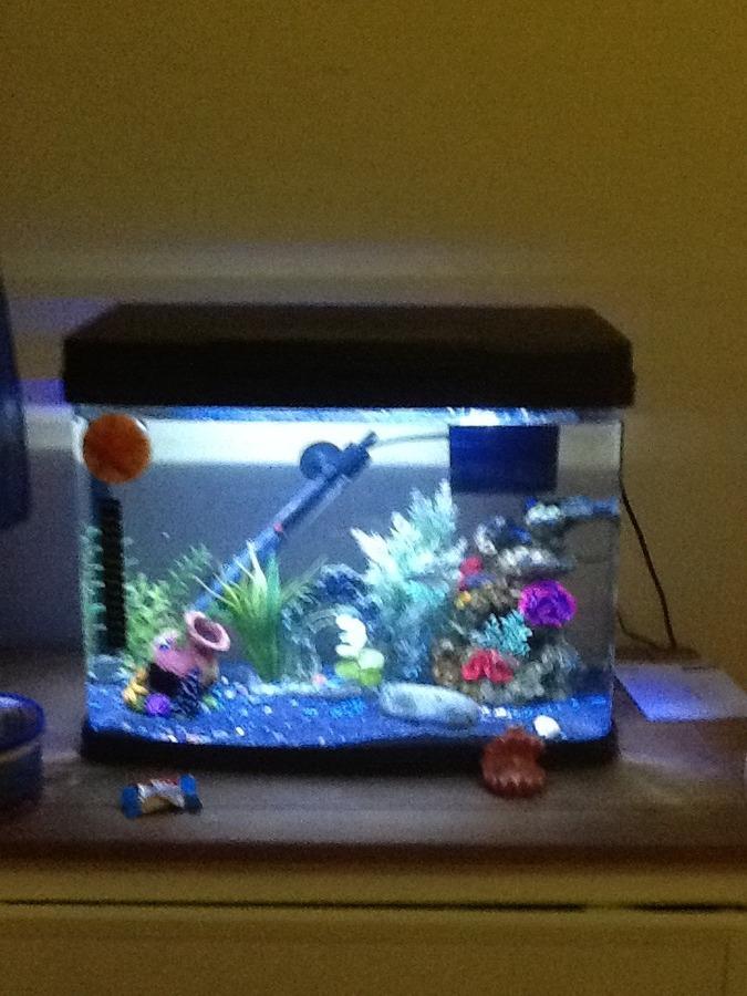 Zebra Danios Dying In New Aquarium :( | My Aquarium Club