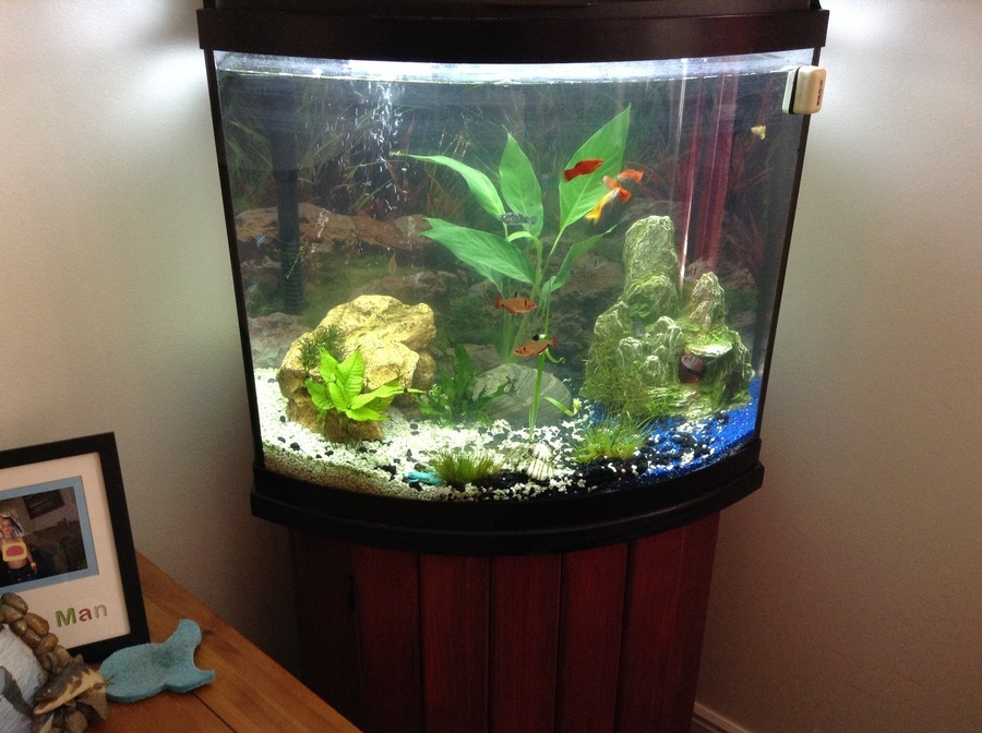 Fish Tank Making Room Smell