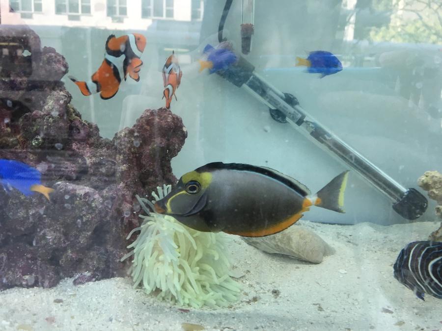 Fish Dying After New Pump   My Aquarium Club