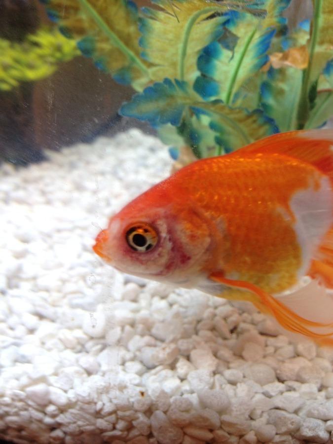 Will Pimafix And Melafix Cure This? | My Aquarium Club