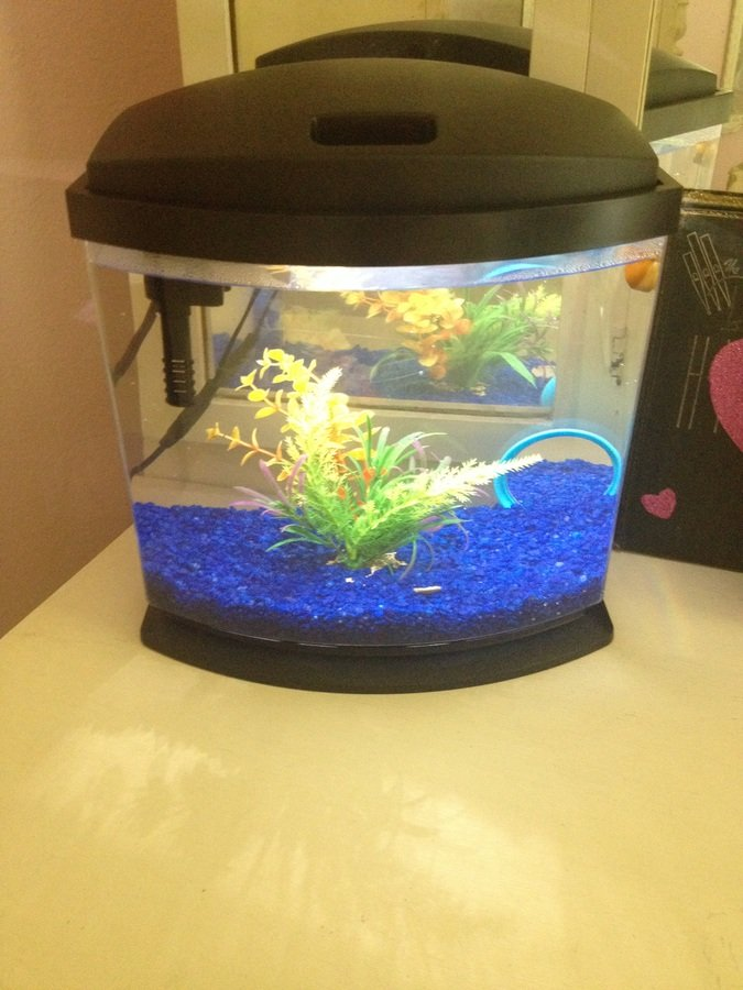 What kind of tropical fish can live in a for How to take care of fish tank
